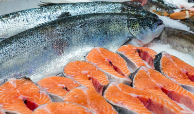 Michael van Bruggen fresh salmon farming europe